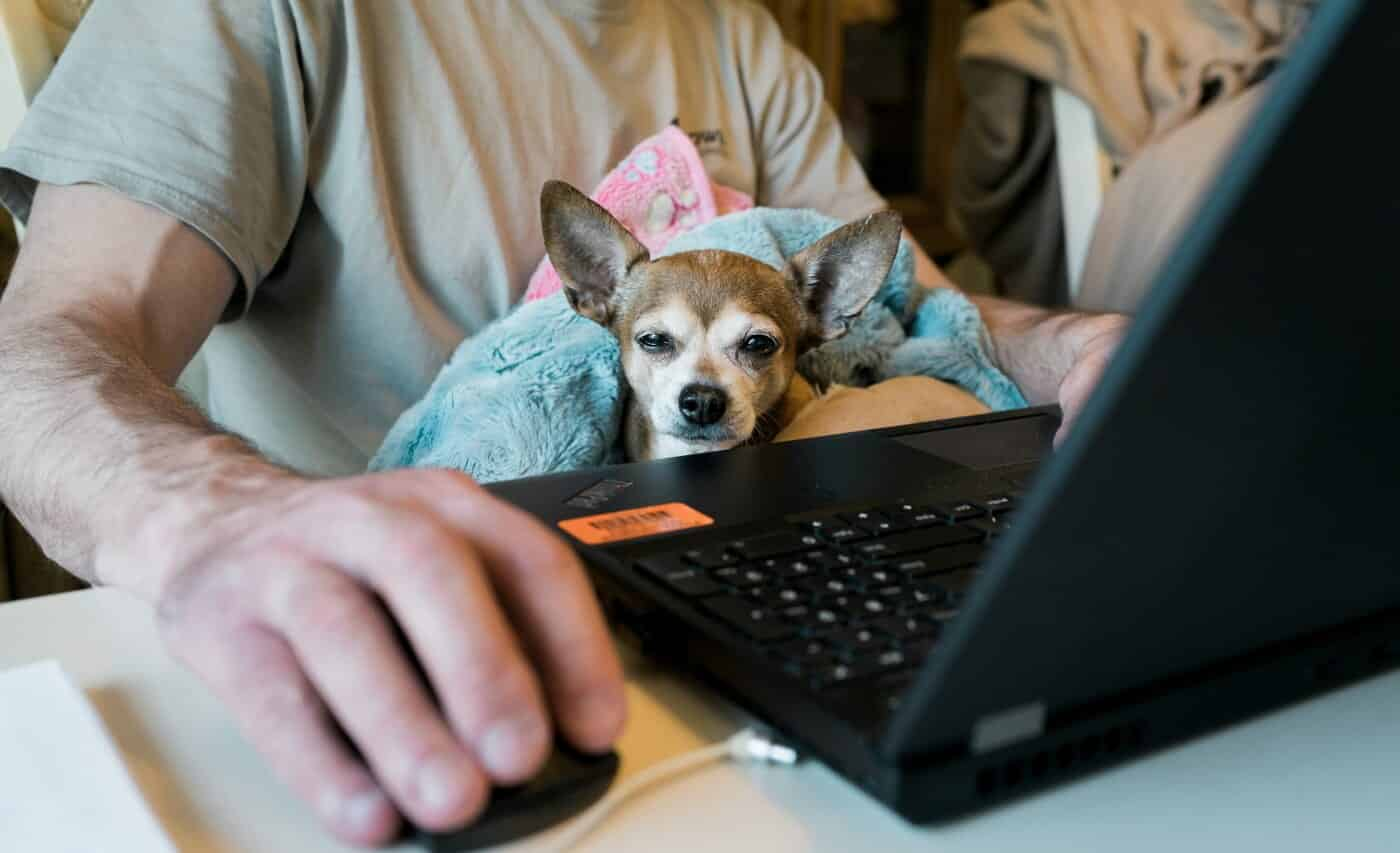 Trabalhar de pijama