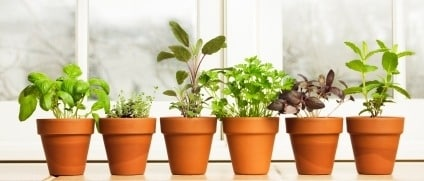ervas-aromaticas-casa