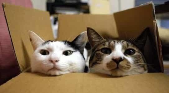 gatos-caixa-cartao