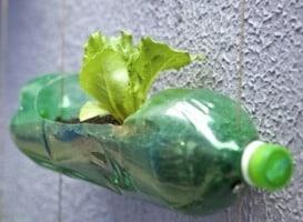 horta-garrafa
